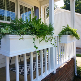 fern planters on white porch railing during christmas