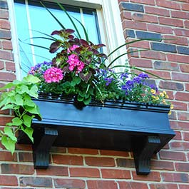 black window box with beautiful coleus flower center piece
