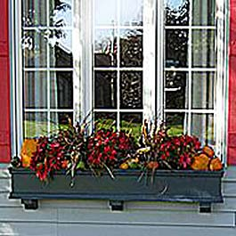 blue window box with pumpkins and squash decorations