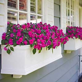 flower window box angled view with pink impatien flowers