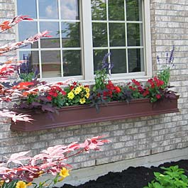 burgundy window box with japanese maple and red and yellow flowers