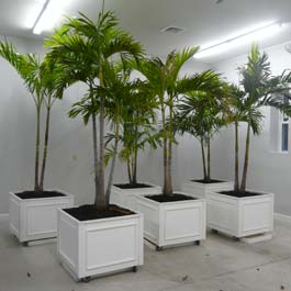 white planter boxes on wheels with palm trees growing out