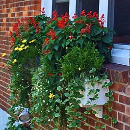 window box with tall plants and flowers