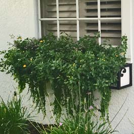 metal window box completely covered up with greenery