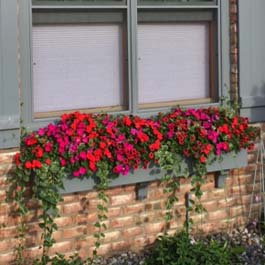 grey window box full of red flowers