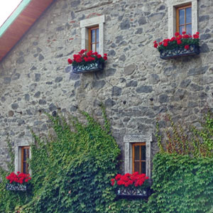 Wrought iron window boxes on ivy wall farniente winery