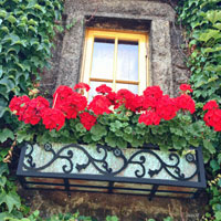 Wrought Iron Ornamental Window Boxes