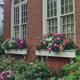 Traditional window boxes with towering displays