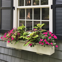Traditional window boxes with coleus and pink impatiens
