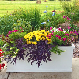 PVC planter on concrete patio as border with Marigolds and purple heart