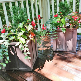 Brown planters on stained deck with possibly begonias