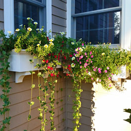 Cater-corenered window boxes