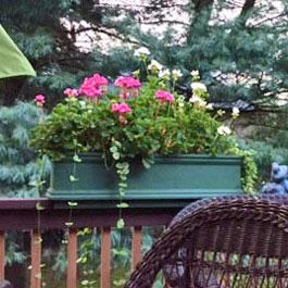 Green railing flower box