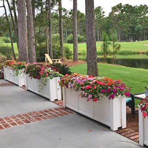 "6' x 18"" Tall Daisy Planters at Golf Course"