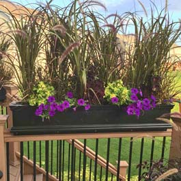 Window box with tall plants for privacy