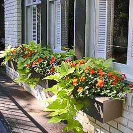 hanging vines and orange flowers fall flower box arrangement