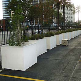 Extra large planters with trees in New Orleans parking lot