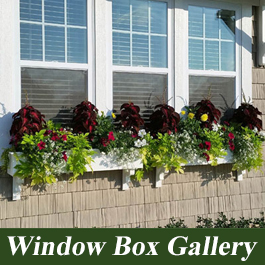 window box photos and ideas