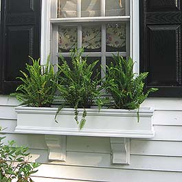 white window box with fancy corbels and nephrolepis ferns