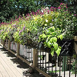 wrought iron flower box on composite and metal railing
