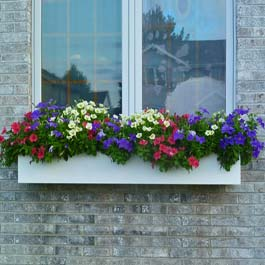 plain white window box with red, purple, and yellow petunias