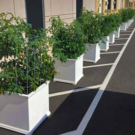 white garden planters for tomatoes