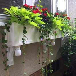 white window box with unique custom brackets and periwinkle vine