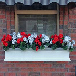 red and white rose window box