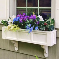 Daisy Window Boxes